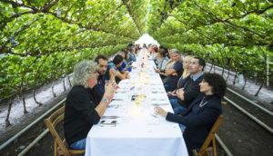 Slider Sitting diner druivenkas
